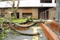 A tree collapsed on a park in Tsim Sha Tsui after Typhoon Vicente hit the city. Photo: SCMP