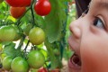Children are more likely to take an interest in fruit and vegetables if they have been involved in growing them. Photo: Felix Wong
