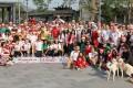 Santa Hash participants at Aldrich Bay park in Shau Kei Wan before the start of the 25th anniversary run on Sunday. Photo: Edmond So