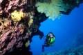 Great Barrier Reef. Photo: SCMP