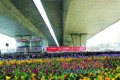 Hundreds of flower pots fill the space beneath an express bridge at the Nongye Road intersection in Zhengzhou. Picture: SCMP Pictures