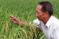 Agricultural scientist Yuan Longping. Photo: Xinhua