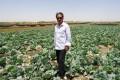 Jin Jianzheng in his Chinese cabbage field in Khartoum.
