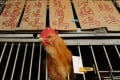 A stall selling live chickens in Kowloon City. Photo: Felix Wong