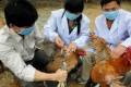 Guangxi health workers inoculate chickens to halt bird flu. Photo: AFP