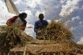 Analysts blame shortages of some crops on complex import licensing procedures and graft. Photo: Reuters