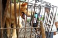 A dog waits to be sold for meat in a market in Yulin in south China's Guangxi Zhuang Autonomous Region. Photo: AP