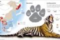 Tiger populations