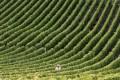 Vineyard in Eastern France. Photo: AFP
