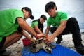Conservationists clean a sea turtle in Lingshui, south China's Hainan Province. Photo: Xinhua