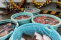 Japan says its catch is made under strict safety controls. Photo: AFP