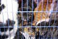 Caged rescued cats in Wuxi, Jiangsu province. Photo: AFP