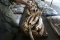 The smuggling ring illegally imported almost 12 tons of ivory worth HK$767 million. Photo: SCMP