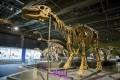 Lanzhousaurus magnidenson show at the HK Science Museum.