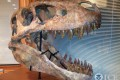 This Tyrannosaurus bataar skull was seized in the US. Photo: AP