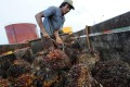 A worker with palm oil fruit in Indonesia. Photo: AFP