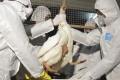 Officials cull poultry in Zhuji, Zhejiang. Photo: Reuters