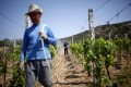 Putting Chinese wine on the map