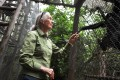 Jane Goodall says China is exploiting Africa's resources just like European colonisers did with disastrous effects for the environment. Photo: AFP
