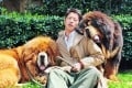 An unidentified man poses for a photo with two Tibetan mastiffs after they were sold at a 'luxury pet' fair in Zhejiang province. One of the Tibetan mastiff puppies (left) was sold in China for almost US$2 million. Photo: AFP