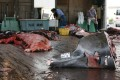 Workers rest after butchering a Baird's beaked whale at Wada port in Minamiboso, southeast of Tokyo. Photo: Reuters