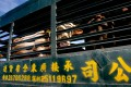 Some 20 countries export beef to Hong Kong at present.