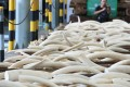 Hong Kong had been increasingly seen as a transport hub for ivory.