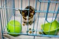 The kitten, pictured before it was decapitated. Photo: SCMP Pictures
