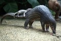Pangolin numbers have plunged in recent years in part because of Chinese demand. Photo: AP