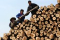 Labourers moving logs at a timber market in Hefei, Anhui. Hong Kong is a popular transit point for both the legal and illegal timber trade, with many of the raw logs redirected to processing factories on the mainland. Photo: AFP