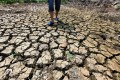 The drought affecting large areas of farmland in central China's Hubei and Henan provinces has been caused by the driest summer since 1961, say officials. Photo: Xinhua