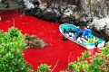 Fishermen, on a boat with their fresh kill, navigate blood-filled waters in the coastal town of Taiji in Japan's Wakayama prefecture, during last year's annual dolphin cull. Photo: AP