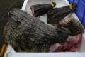 Butchered crocodiles at a seafood market. Photo: AFP