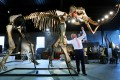 James Rylands, Auctioneer and Director of Summers Place Auctions, prepares the skeleton of an Ice Age woolly mammoth in London. Photo: AP