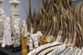 Hong Kong has destroyed 11.4 tonnes of its 29.6-tonne stockpile of confiscated ivory, including the products above. Photo: Felix Wong