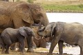 African elephants could disappear from the wild within a generation, according to conservationists. Photo: AP