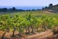 Languedoc has long lacked respect, but some impressive biodynamic wines by Gérard Bertrand are set to revamp its image.