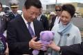 President Xi Jinping receives the purple bear in Tasmania. Photo: AFP