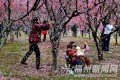 A woman shaking blossom from a tree at the park in Fuzhou. Internet users have said the women should be fined. Photo: Fznews.com.cn