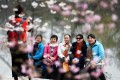 Tourists pose for photos beside cherry trees at the Yuyuantan Park in Beijing. Photo: Xinhua