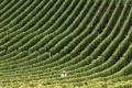 A vineyard in Champagne. Photo: AFP