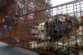 Caged dogs in Yulin waiting to be transferred to a slaughterhouse. Photo: AP Images
