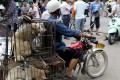 A dog's dinner: A vendor with dogs destined for the dinner plate in Yulin. Photo: Reuters