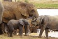 Some 100,000 elephants were killed for their ivory between 2010 and 2012, according to a conservation group. Photo: AP