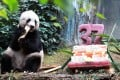 Jia Jia is 37 - equivalent to 100 in human years. Photo: May Tse