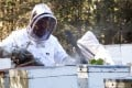 Robbie Charles, apiary manager and owner, at work