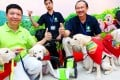 (From left) Konica Minolta Director Robert Ip Cheuk-hung, Andy Chui Man-chun and Director of HK Seeing Eye Dog Service Raymond Cheung Wai-man meet the press with the first successful batch of locally bred guide dogs for the visually-impaired, at the Seeing Eye Dog Services in Kwai Chung. Photo: K.Y. Cheng
