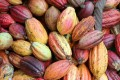 To'ak uses cacao beans from various kinds of cacao fruits to make its chocolate.