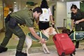 Sniffer dogs are used to try and detect smuggling of illegal ivory. Photo: AFCD