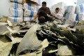 Indonesian customs and quarantine officers inspecting some 3,000 pieces of sharks fin seized at the Soekarno-Hatta airport, intended for shipment to Hong Kong. Photo: AFP